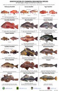 Fish id recfin for California saltwater fish species